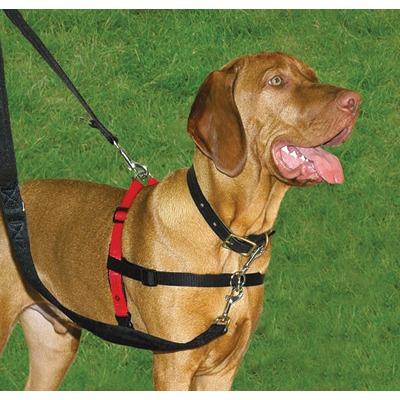 arnés halti, solución para perros que tiran (100% efectivo).