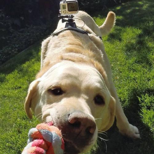 arnés para perro todas las razas fetch dog harness gopro