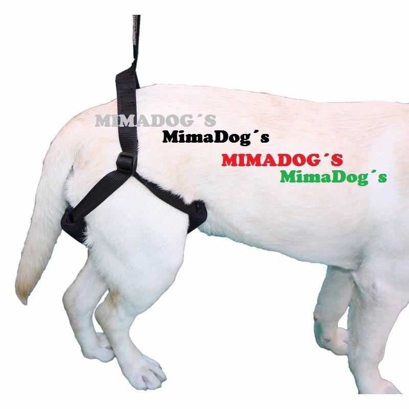 arnes perro mercadolibre