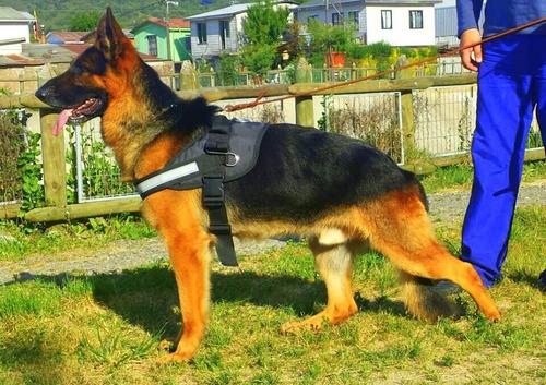 arnes perro adiestramiento y servicio