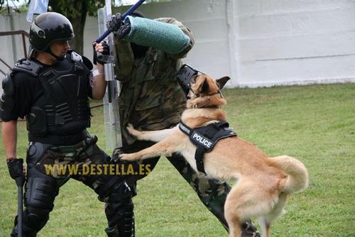 arnés profesional perros police k9 talla x x l pethome chile