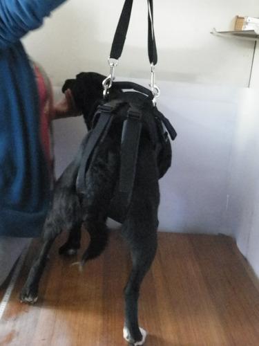 arnes rehabilitacion tren trasero perros