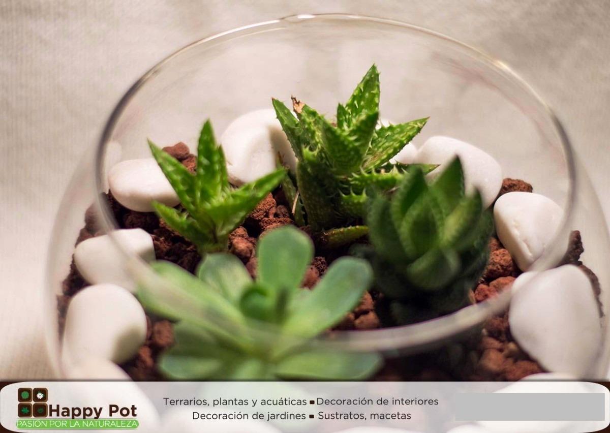 Arreglos con plantas en mercado libre for 10 plantas de ornato