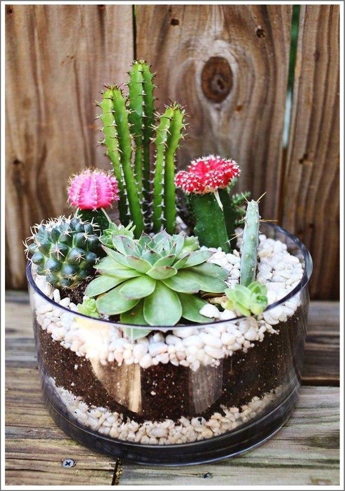 arreglos de plantas hermosas en macetas de vidrio y otros