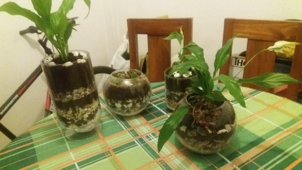 Arreglos de plantas hermosas en macetas de vidrio y otros for Arreglos de jardines con macetas