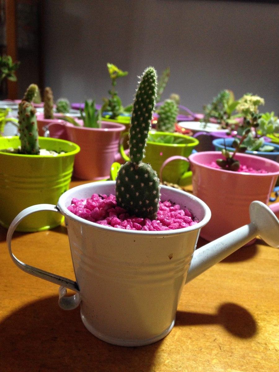 Arreglos en cactus y suculentas en mercado libre for Cactus y suculentas