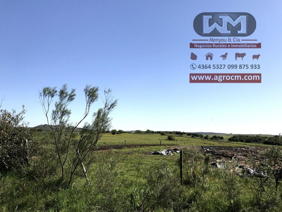 arrendamiento campo 1300 hectáreas colonia campo ganadero