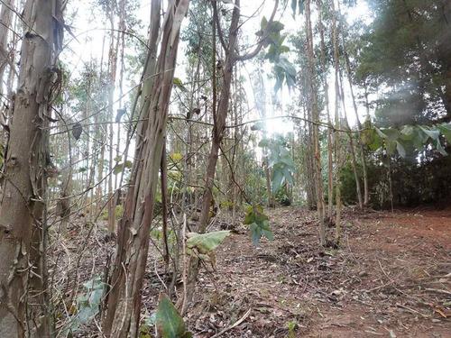 arriendo cabaña en parcela de 5000 mt2 de bosques eucaliptus