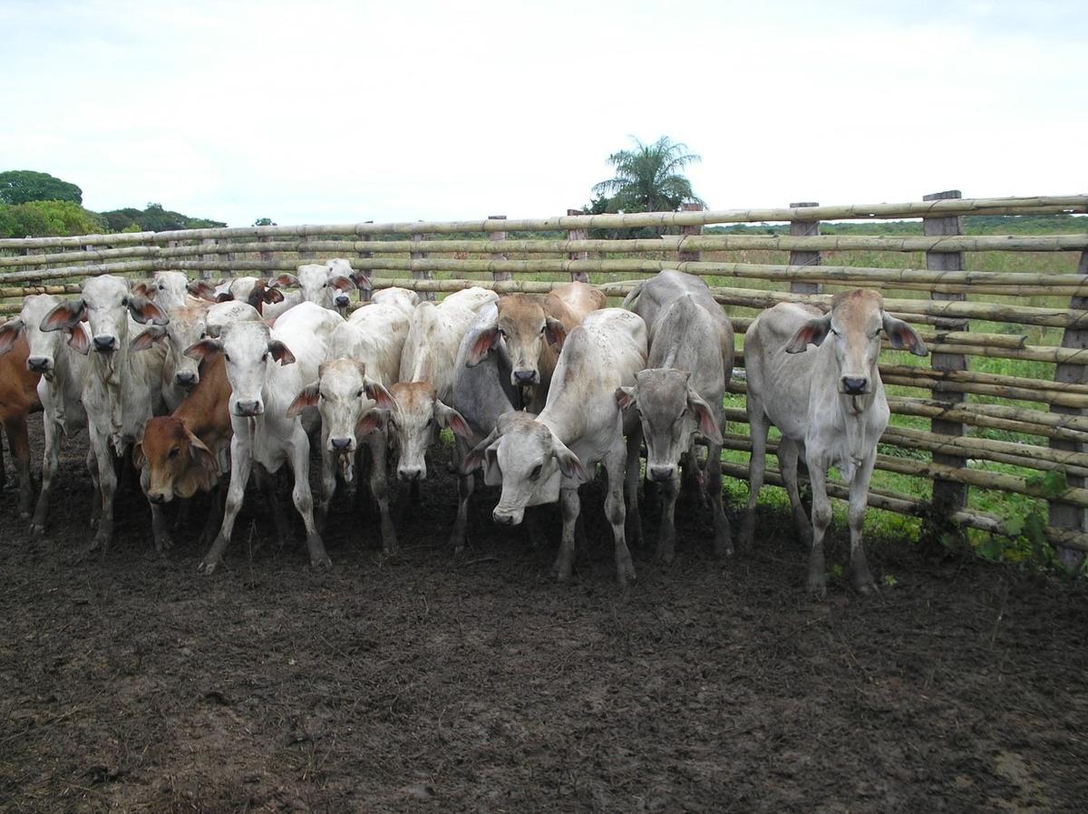 arriendo finca de 4.000 has en casanare para ganado