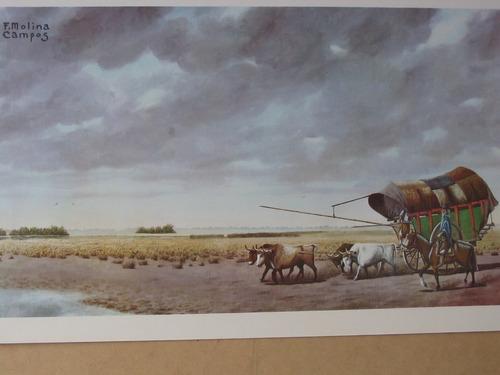 arte argentino : molina campos, f - ed. 1972 certificada