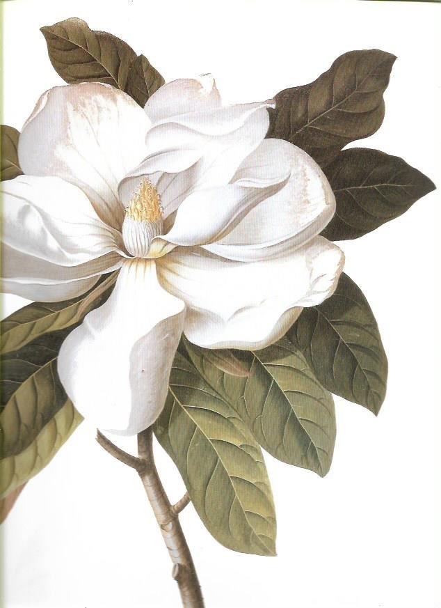 Arte & Decoración : Flores & Plantas - Láminas Botánica - $ 200,00 ...