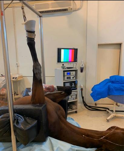 artroscopia de equinos