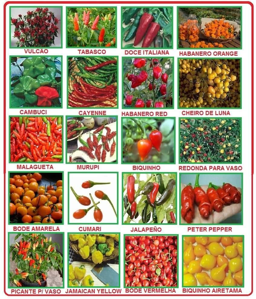 Tipos de pimenta