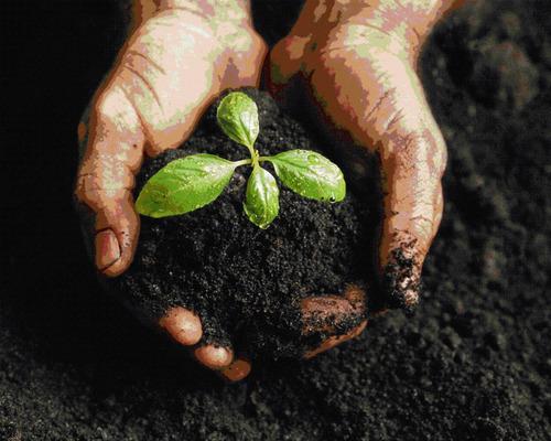 asesoria agricola presencial- on line cultivos innovadores!