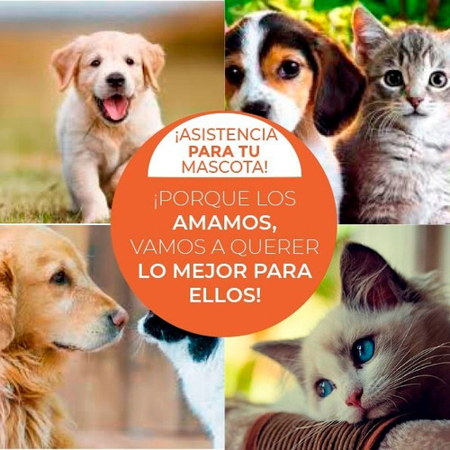 asistencia para mascotas/desempleo/medico/robo/vial