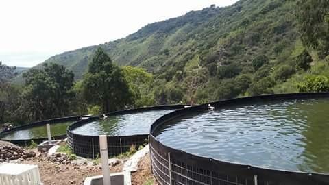 asistencia técnica en sis.biofloc de producción acuícola