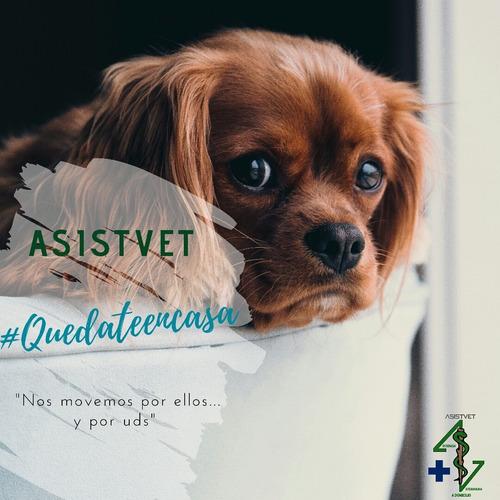 asistencia veterinaria a domicilio (asistvet), urgencias