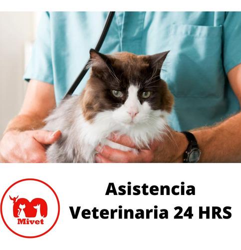 asistencia veterinaria, urgencias montevideo las 24hrs