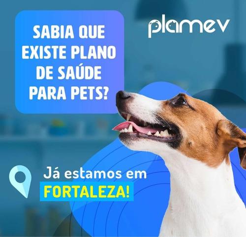assistência de saúde para pets