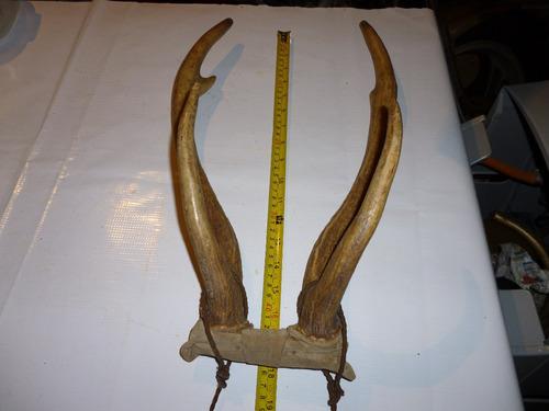 asta cuerno de ciervo artesanos