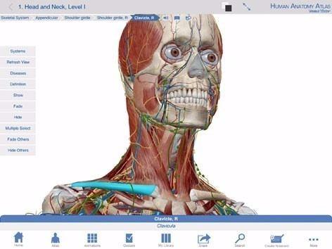 Atlas 3d Anatomía Humana Cuerpo Medicina Android Celular - $ 129,00 ...