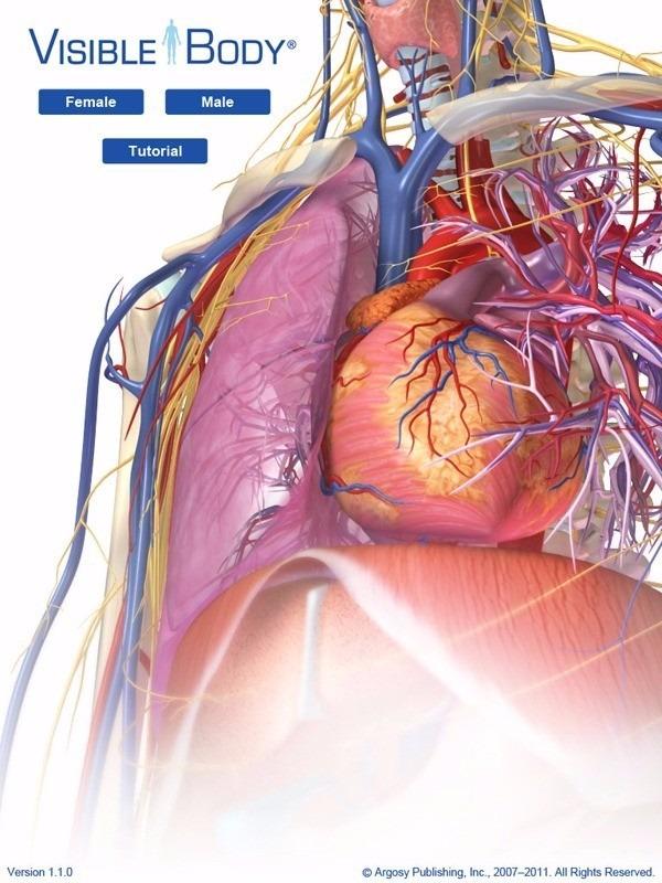 Human anatomy atlas 3d