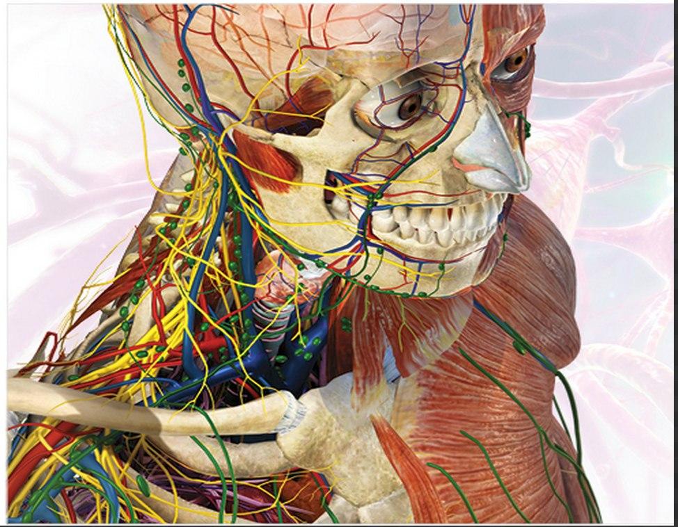 Atlas Anatomia 3d - Visible Body. - R$ 19,00 em Mercado Livre