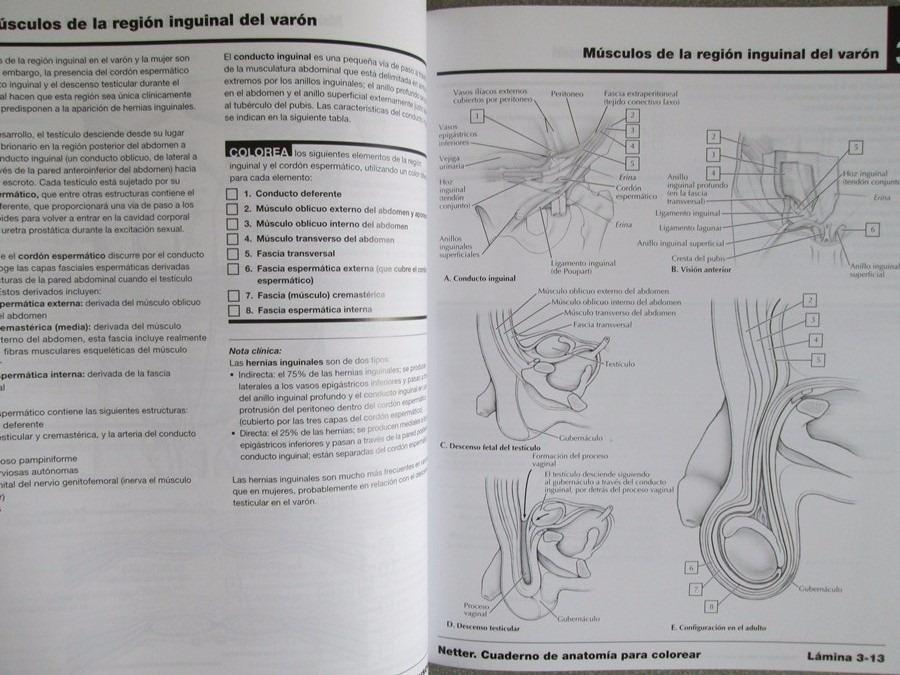 Atlas Anatomía Frank Netter Para Colorear - S/ 60,00 en Mercado Libre