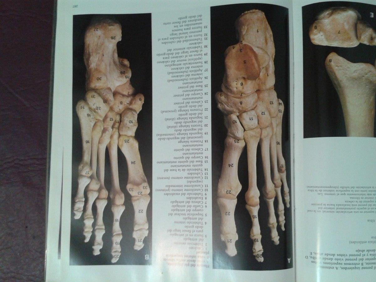 Atlas Anatomia Humana-cuerpo Humano - $ 400,00 en Mercado Libre