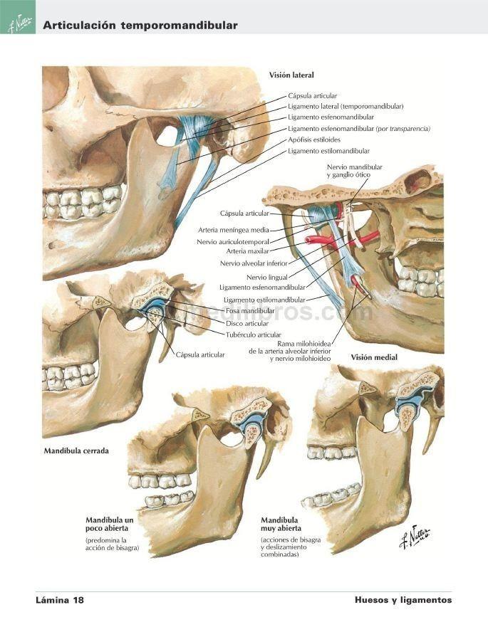 Atlas Anatomia Humana Netter 6 Ed. Anillado - $ 11.500 en Mercado Libre