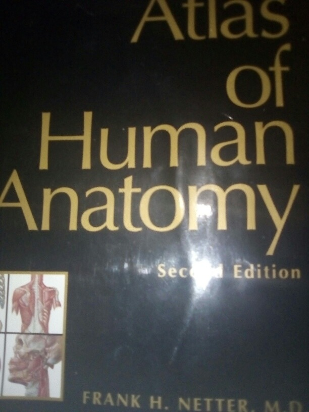 Atlas Anatomia Humana - Netter - Libro En Ingles - Bs. 5.500.000,00 ...