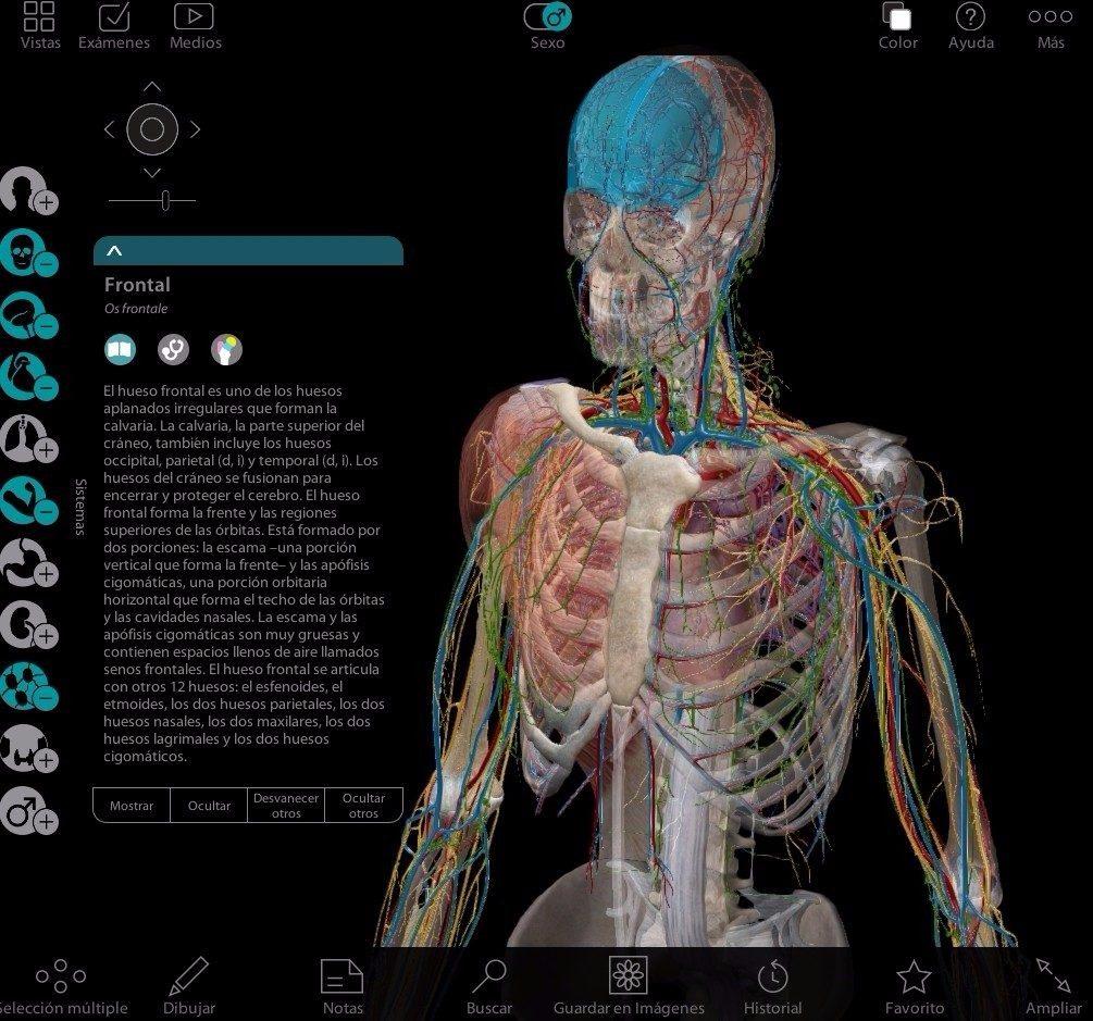 Atlas Anatomia Humana Programa 3d En Español + Pdf Netter - Bs ...