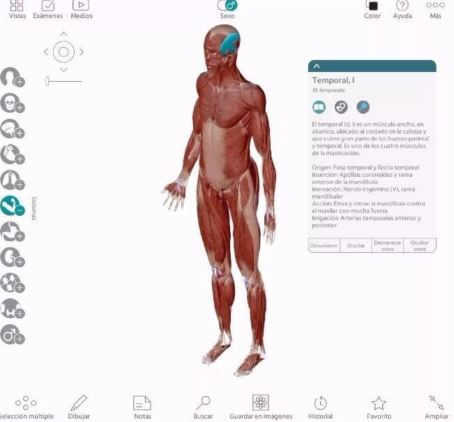 Atlas Anatomía Humana Programa 3d En Español + Pdf Netter - S/ 7,00 ...
