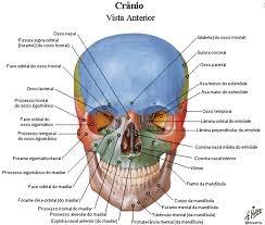 Atlas Anatomia Humana Programa 3d En Español + Pdf Netter