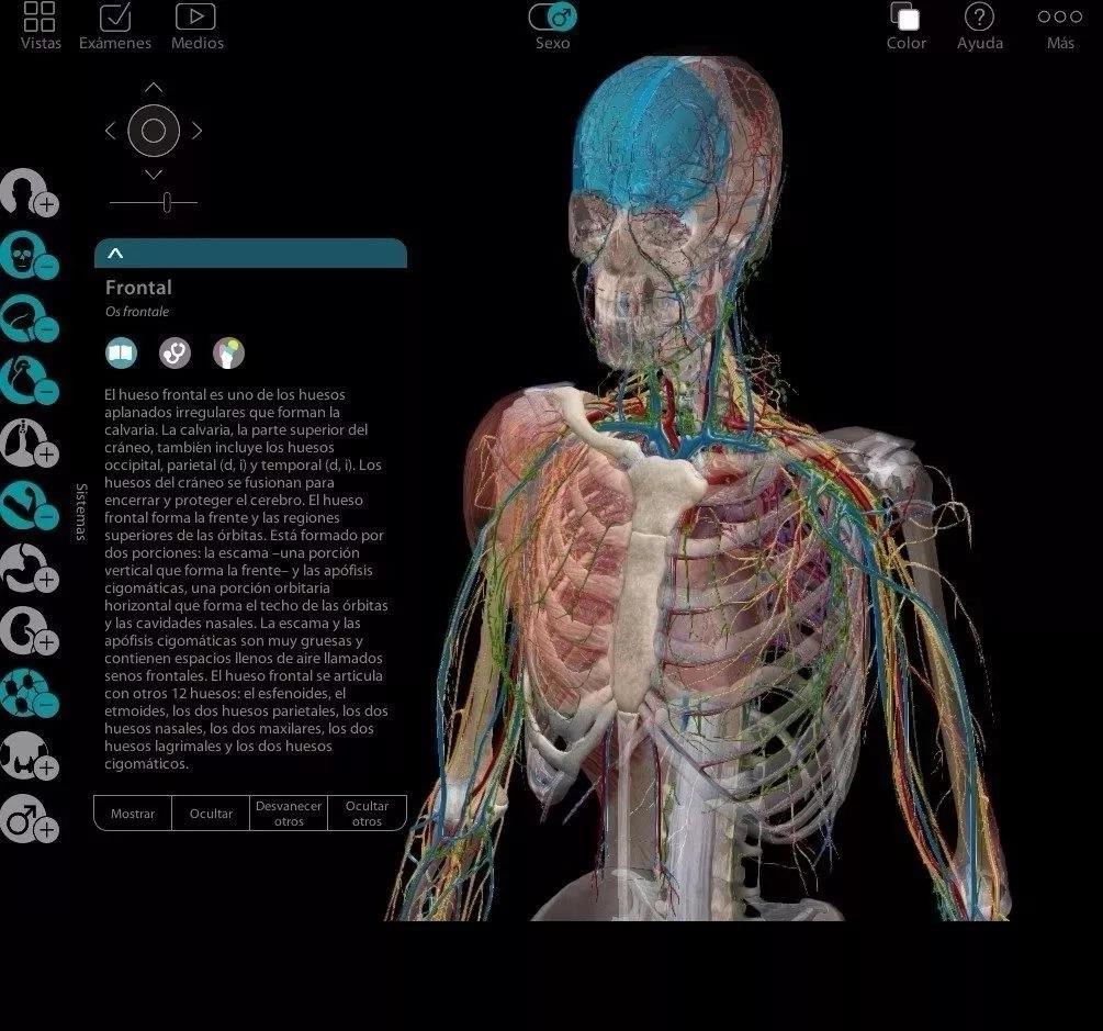 Atlas Anatomia Humana Programa 3d En Español + Pdf Netter - $ 200.00 ...