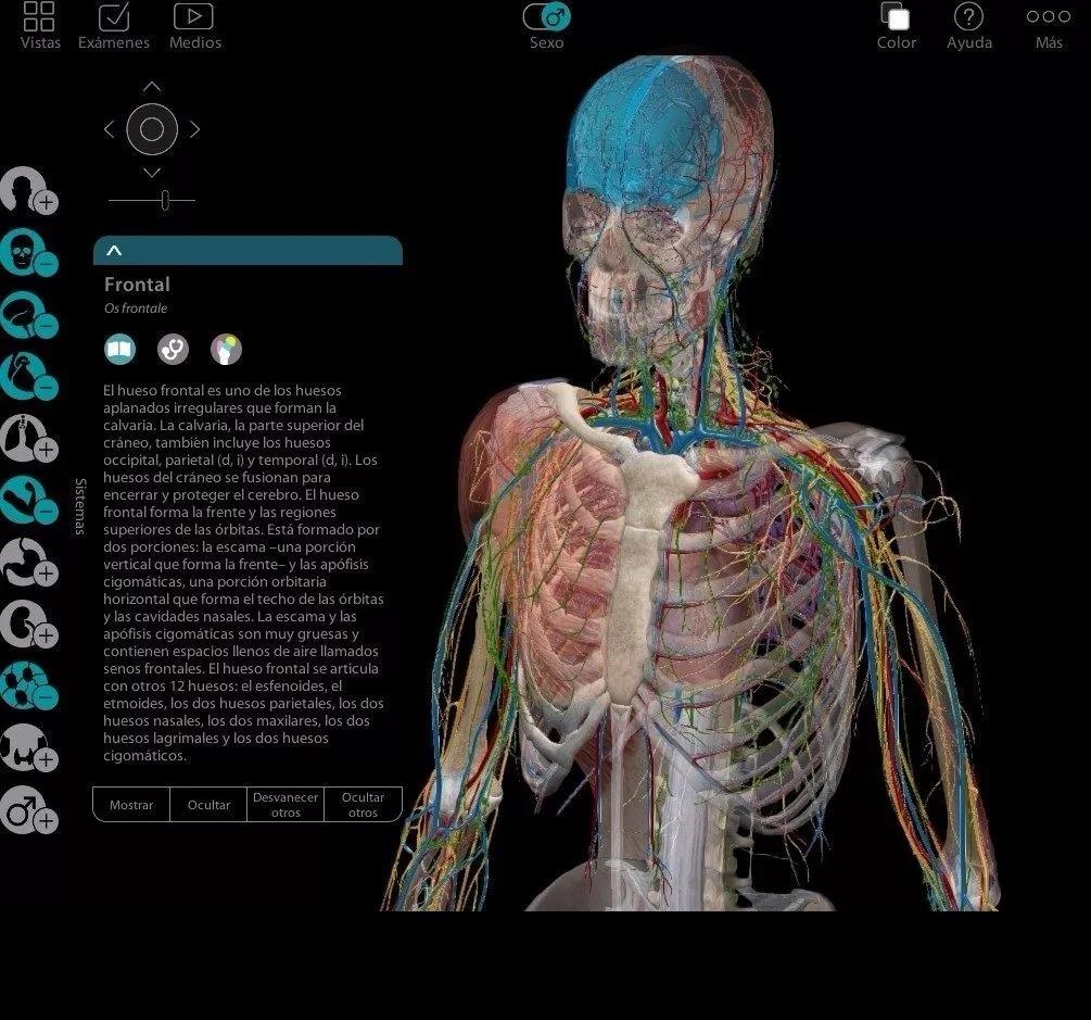 Atlas Anatomia Humana Programa 3d En Español + Pdf Netter - U$S 5,01 ...