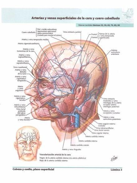 best Anatomia Del Cuerpo Humano En 3D Pdf image collection