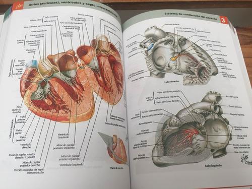 atlas de anatomía de netter 6ta edición
