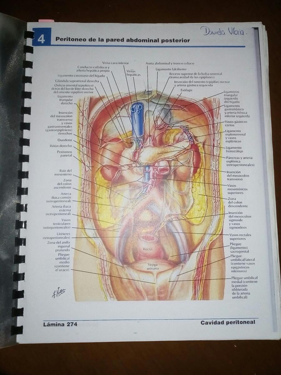 Atlas De Anatomia De Netter - Bs. 400,00 en Mercado Libre