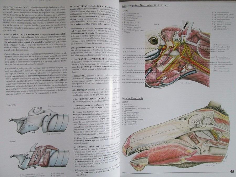 Hermosa Anatomía De Un Pozo De Petróleo Cresta - Anatomía de Las ...
