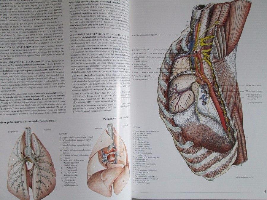 Perfecto Foto Anatomía Perro Bosquejo - Anatomía de Las Imágenesdel ...