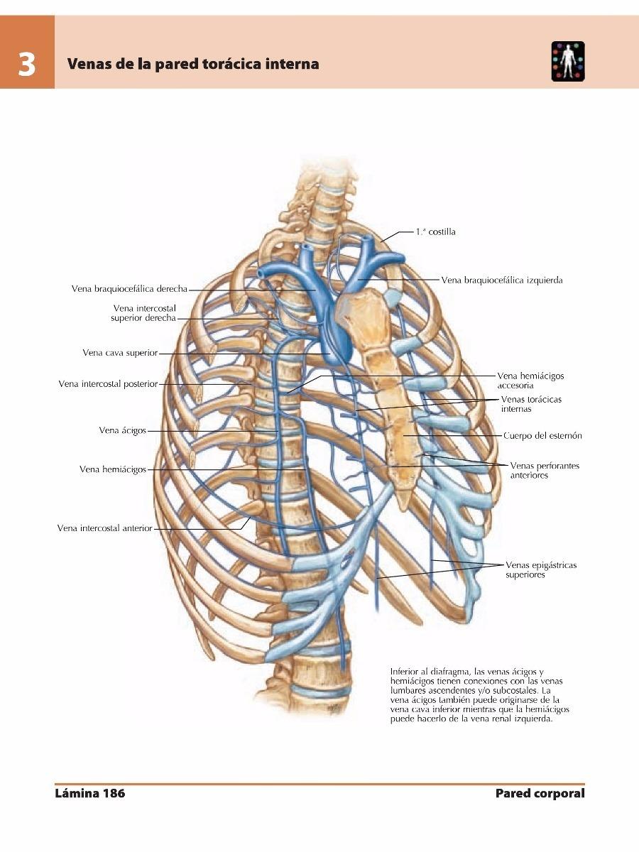 Atlas De Anatomía Humana 5ª Edición- Frank H. Netter - $ 2.500 en ...