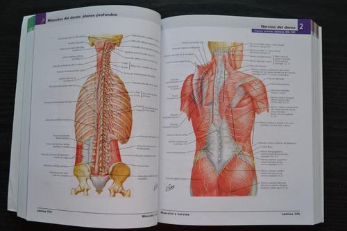 atlas de anatomia humana 6 edicion + cd  (frank h. netter)