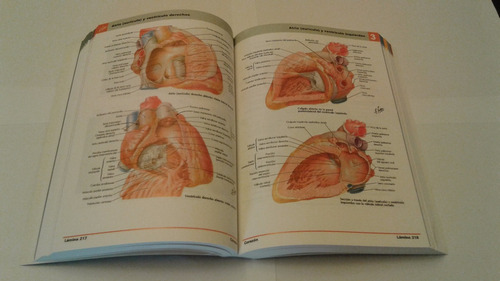 atlas de anatomía humana - f. netter 6a edición. nueva