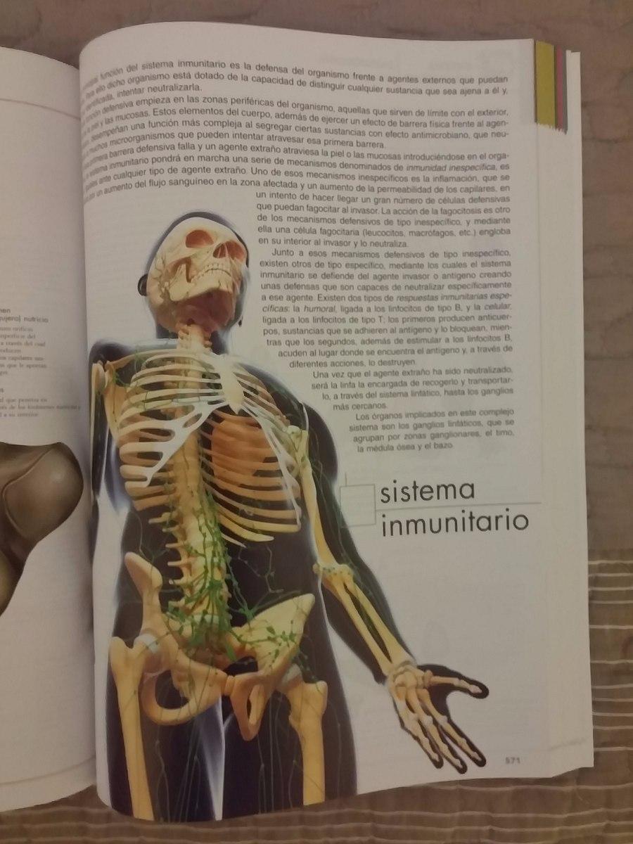 Hermosa Anatomía De Tipo Elaboración - Anatomía de Las Imágenesdel ...