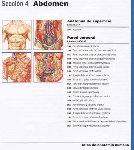 atlas de anatomía humana mini netter original
