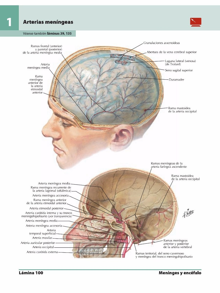 ATLAS DE ANATOMIA DE NETTER DESCARGAR GRATIS PDF DOWNLOAD