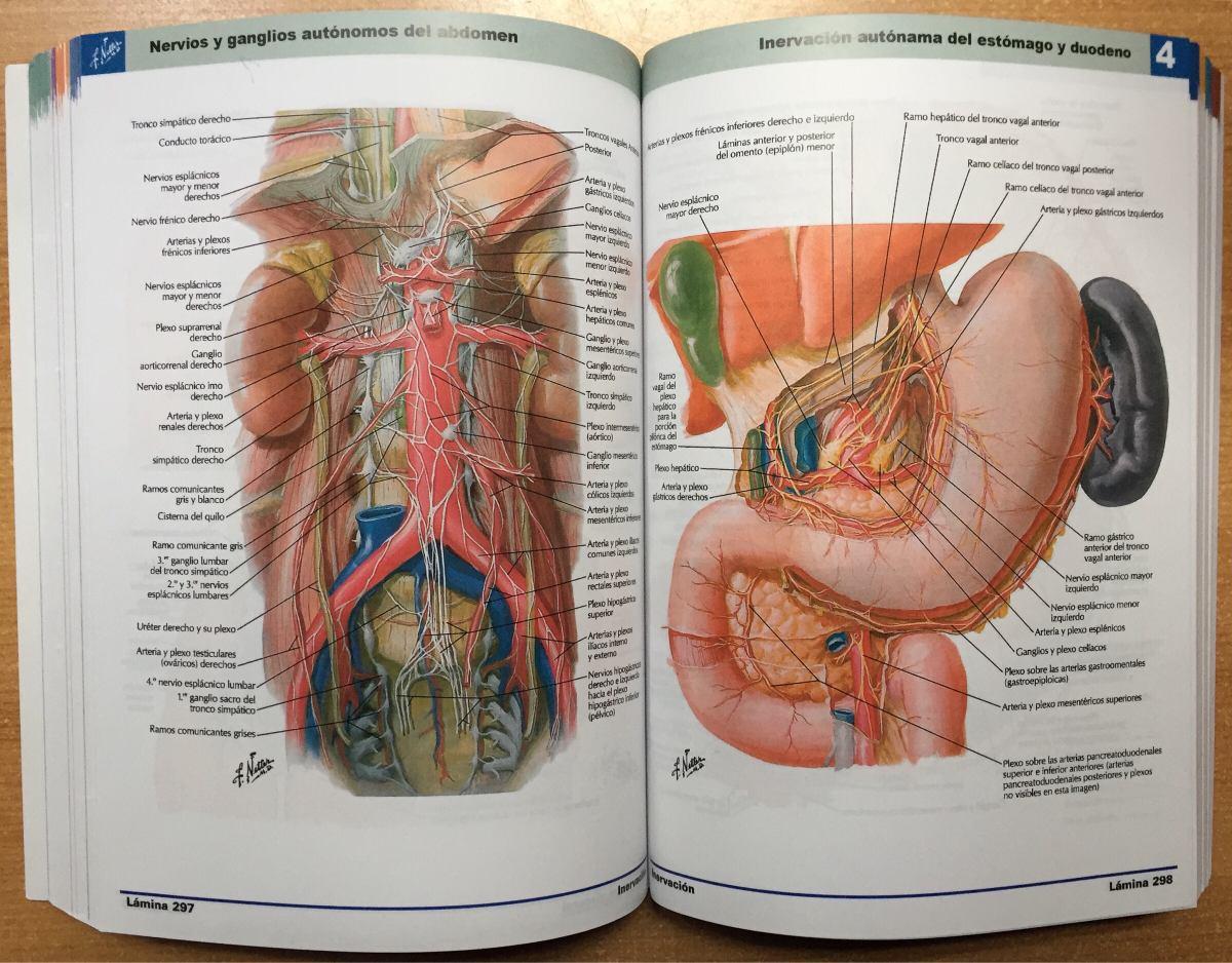 Atlas De Anatomía Humana Netter 6 Enviogratis - $ 19.900 en Mercado ...