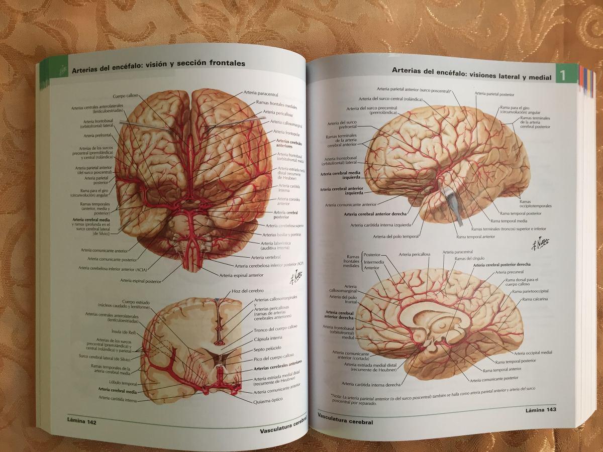 anatomia de gardner pdf español gratis