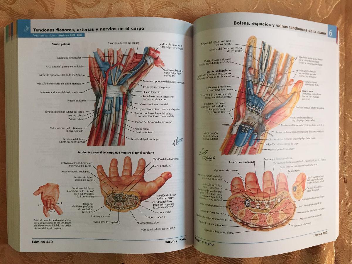 Atlas De Anatomia Humana Netter 6 Enviogratistodochile - $ 21.990 en ...